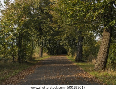 Oak trees alley near Chabarovice town in autumn time
