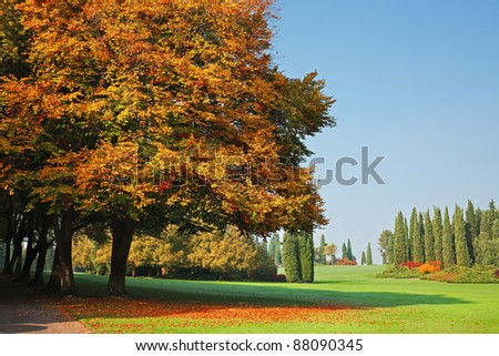 Oak trees in a botanical garden during fall