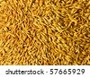 Oat grains sunlight background texture - stock photo