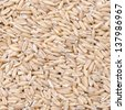 oats background closeup - stock photo