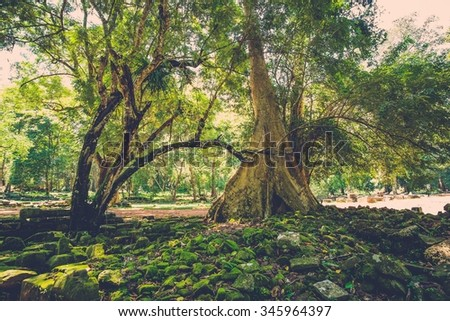 Old banyan tree roots in Angkor temple ruins, Siem Reap, Cambodia.