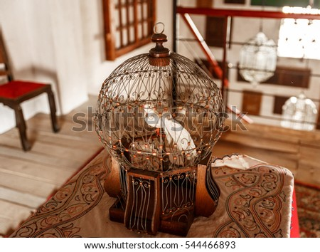 Old birdcage with a white bird inside, in an old house