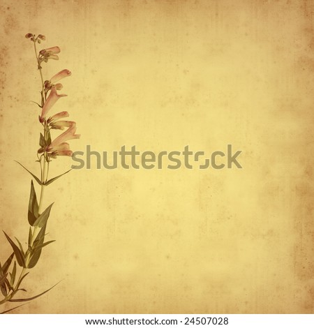 old paper background with Penstemon