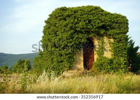 Old stone house and vine cover, France
