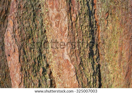 Old tree bark close up view