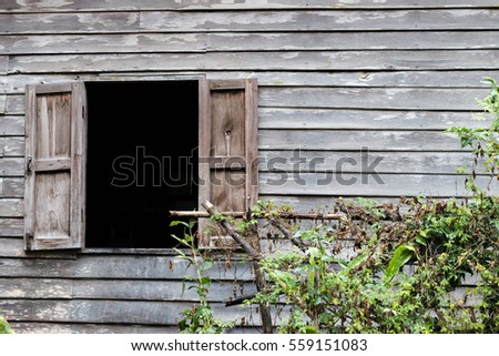 Old windows are Open, with Old wooden Wall and Ivy.