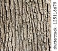 Old Wood Tree Texture Background Pattern - stock photo