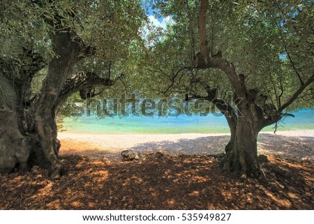 Olive trees on horgota beach - Kefalonia, Greece