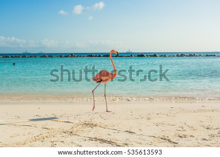 One flamingo on the beach