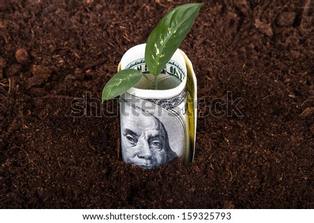 One hundred dollar bill money growing in soil with green plant leaves.
