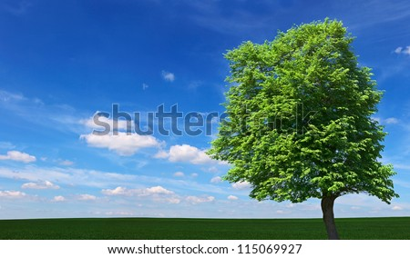 One oak tree on a meadow with grass. Ecology concept panorama with blue sky background