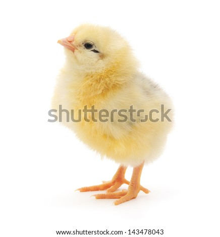 Baby chicken Stock Photos, Illustrations, and Vector Art