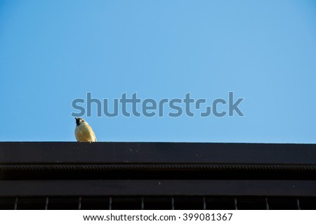 One small cute attentive bird with white feather sitting on black roof high on blue clear sky background sunny day outdoor, copy space