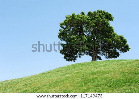 One tree on grassy hill and blue sky