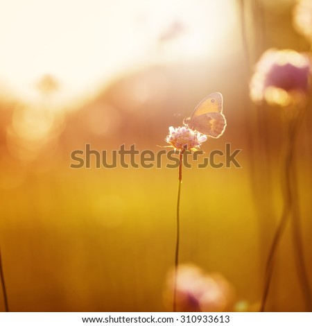 orange butterfly seating on wild pink flower in field at evening sunshine. Nature outdoor autumn vintage photo
