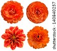 Orange collage flowers - stock photo