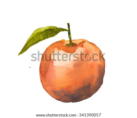 Orange fruit watercolor painting on white background