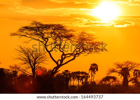 Orange glow of an african sunset with tree in front