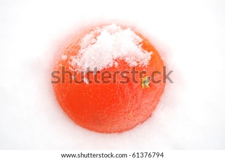 Orange on the snow