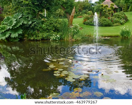 Beautiful japanese water lilies flowers arrangement stock for Ornamental pond