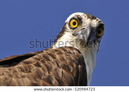 Osprey reassured