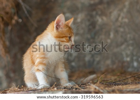Outdoor portrait of playful kitty