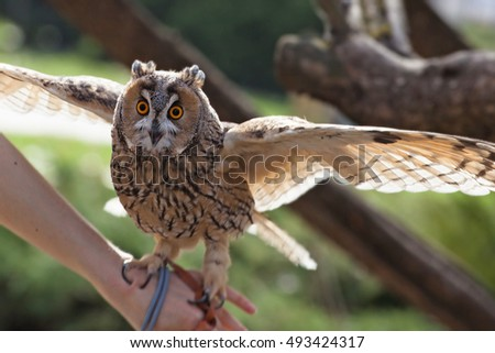 Owl in the  hands in spring forest