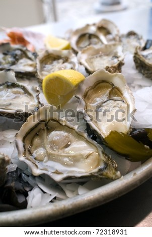 Oyster of the Atlantic Ocean