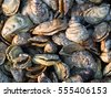 Oysters under cultivation at Rock Harbor, Orleans MA on Cape Cod