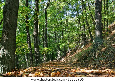 pahtway in deciduous forest