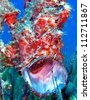 Painted Frogfish or Anglerfish - Antennarius pictus - stock photo