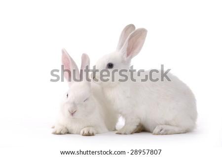 Realistic rabbit illustration - photo#25