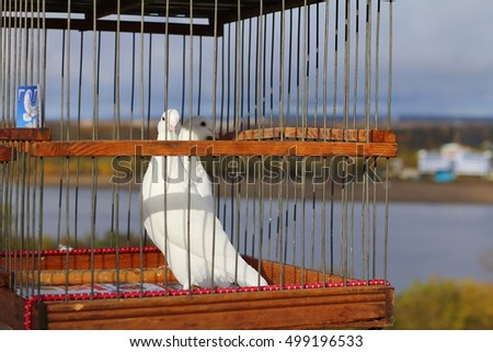 Pair of white doves sitting in a cage on the background of the river.