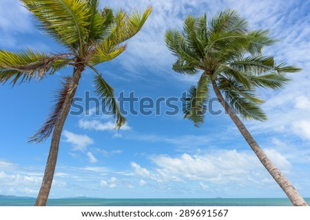 Palm and sea