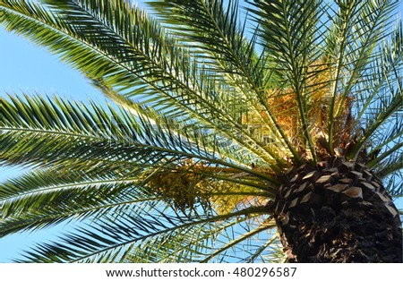 Palm close up on blue sky background. Tropical sunny day