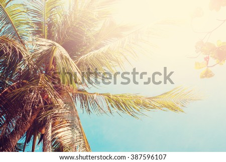 Palm Coconut Tree Thailand Heat Tropical Landscape Holiday Travel Background Effect Toned Sunlight