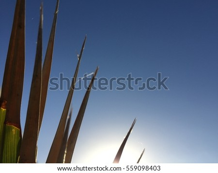 Palm leaf and sunny blue sky background