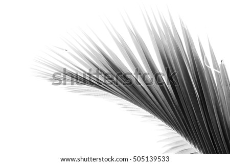 palm leaf pattern background - black and white
