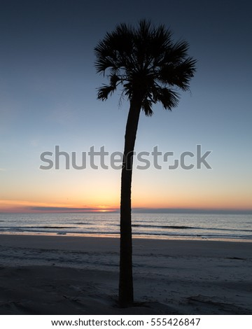 Palm on Beach at Sunrise