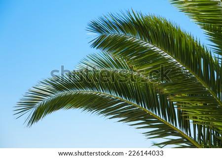 Coconut Plantation Stock Photo 353169845 - Shutterstock