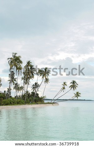Palm tree clear sky turquoise sea and sandy beach