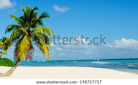 Palm tree entering the ocean on one of the most exotic caribbean beach