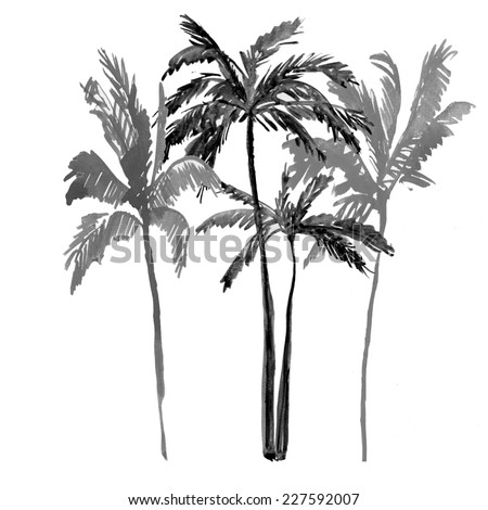 palm tree isolated on white background. watercolor