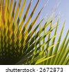 Palm tree leaves against blue sky. - stock photo