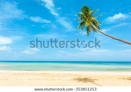 Palm tree leaves over luxury beach