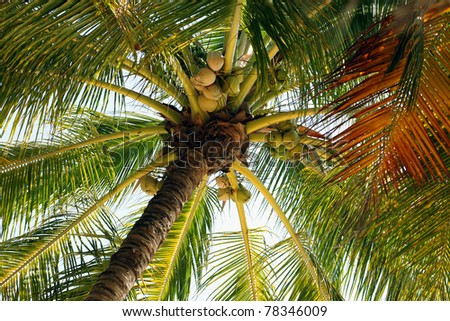 Palm tree shot from below with one brown frond