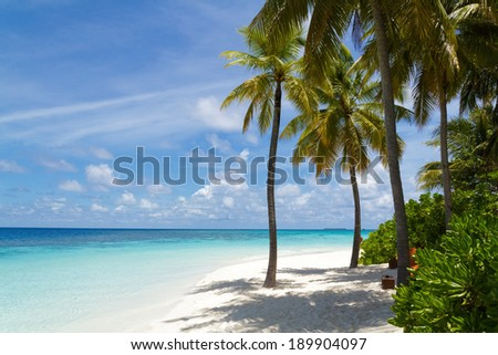 Palm trees and beautiful beach,Maldives