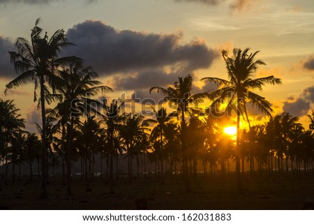 palm trees at beautiful sunset time