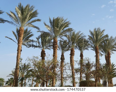 Palm trees on the blue sky and clouds background