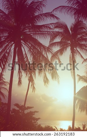 palm trees, vintage film style